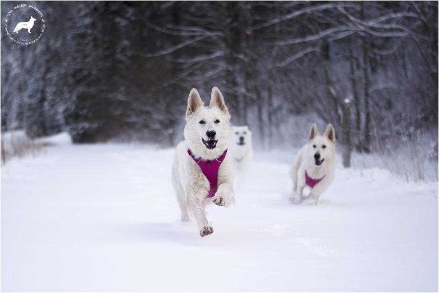 Winter fun ♡