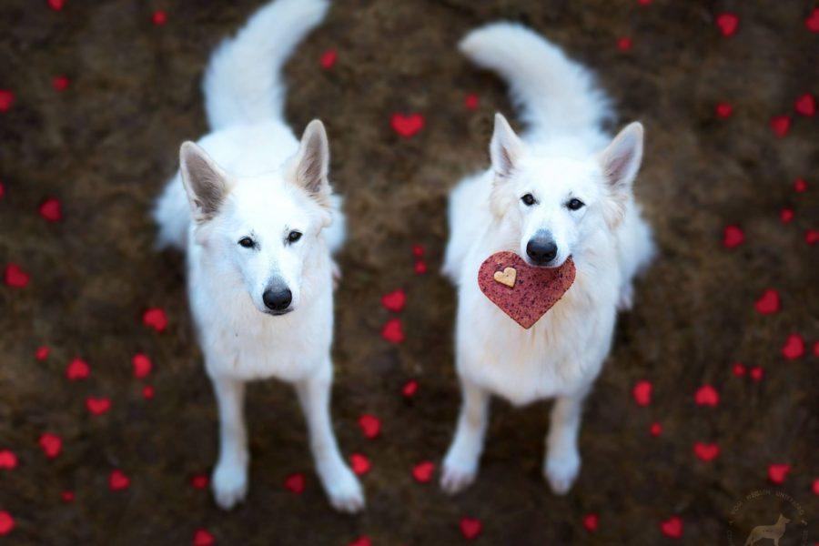Be my Valentine. <3