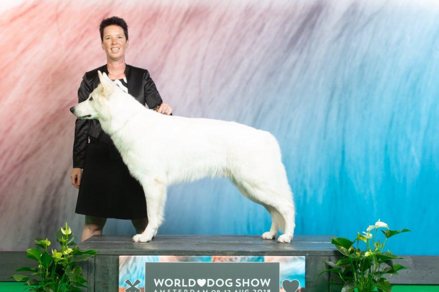 2nd place on World Dog Show in Amsterdam for Divine Diamond vom Weissen Unterberg!