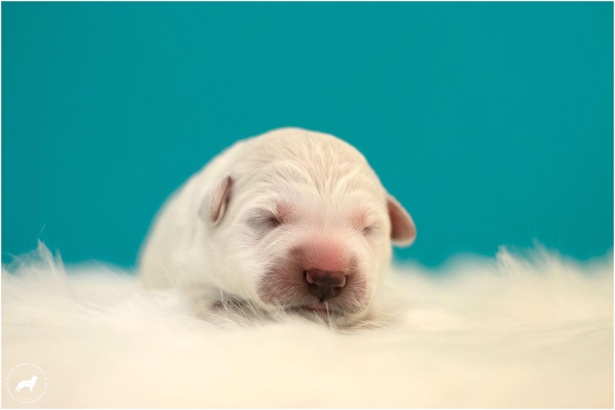 We have puppies <3