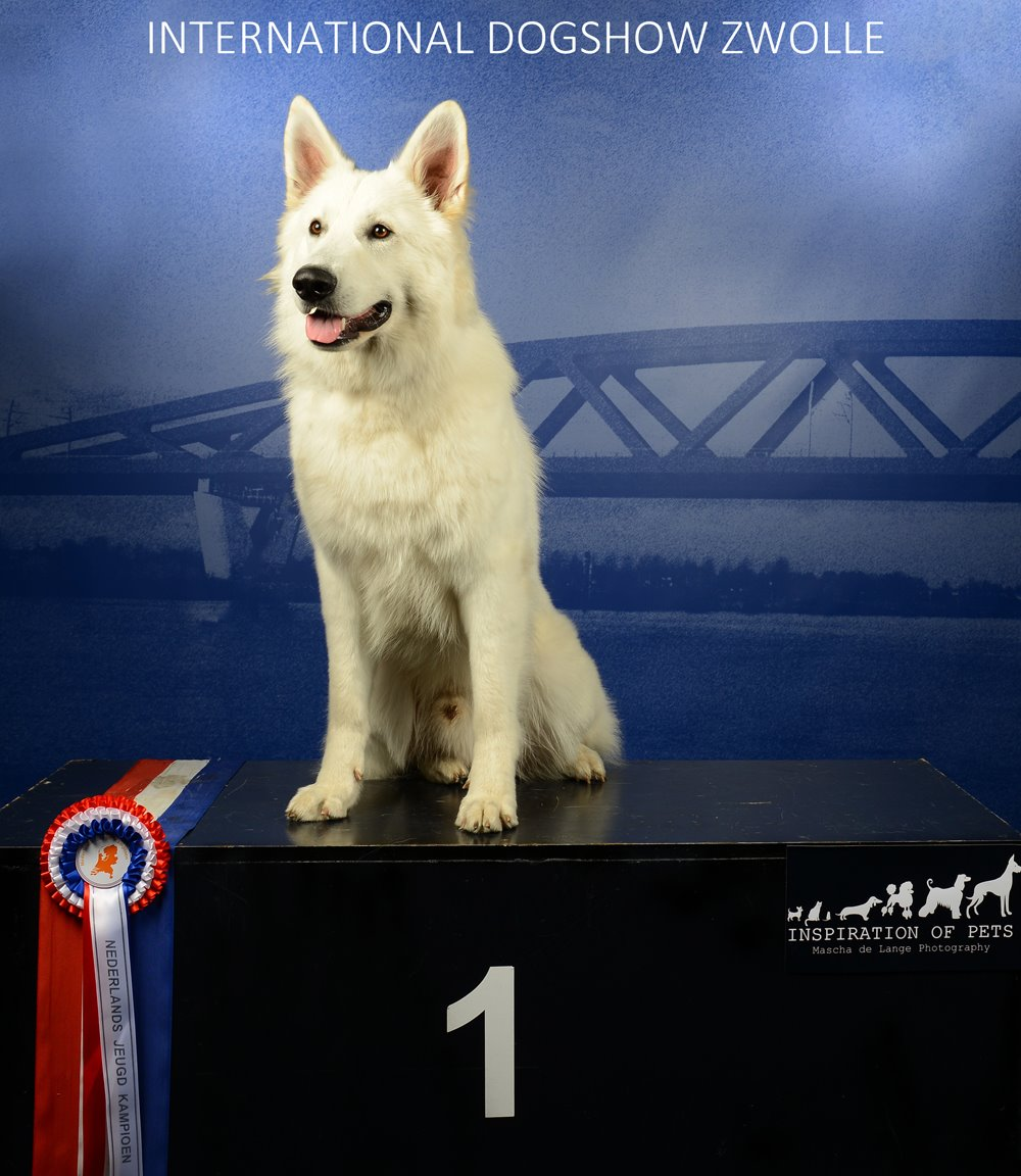 Divine Diamond VWU new Dutch Junior Champion!