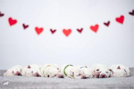 Valentine's puppies <3