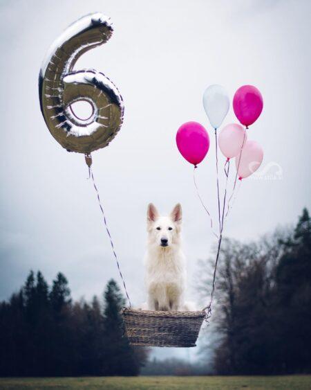 Happy 6th Birthday! ♥️